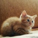 1 котик ищет своего доброго хозяина