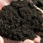 Плодородный грунт (земля под газон)