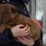 Двухмесячные щенки ищут дом
