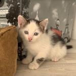 Три маленьких котёнка ищут дом