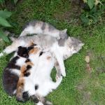 Трёхцветные котята