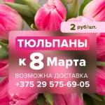 Тюльпаны к 8 марта! Заказать по телефону +375295756905