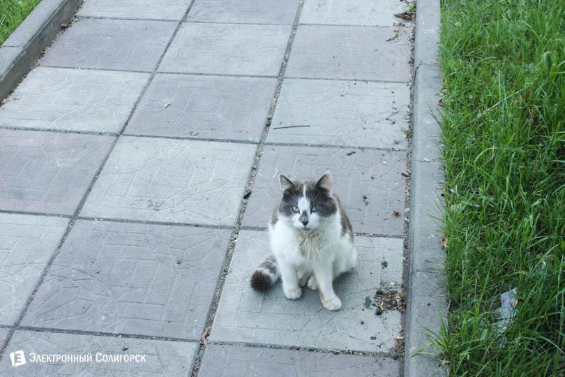 Кот игорь солигорск