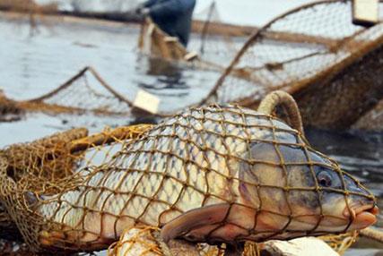 26 кг рыбы ценой в 270 базовых величин. Двое жителей Старобина уличены в незаконном рыболовстве