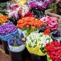 Цветы оптом (для юр.лиц и ИП)