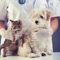 Ветеринарный центр «NEW ЙОРК»